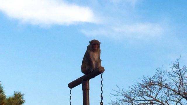 京都市動物園デート
