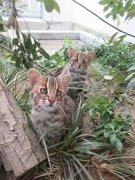 京都市動物園画像2