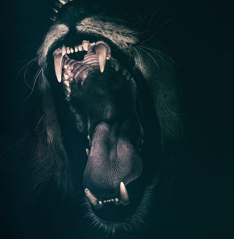 歯の画像2