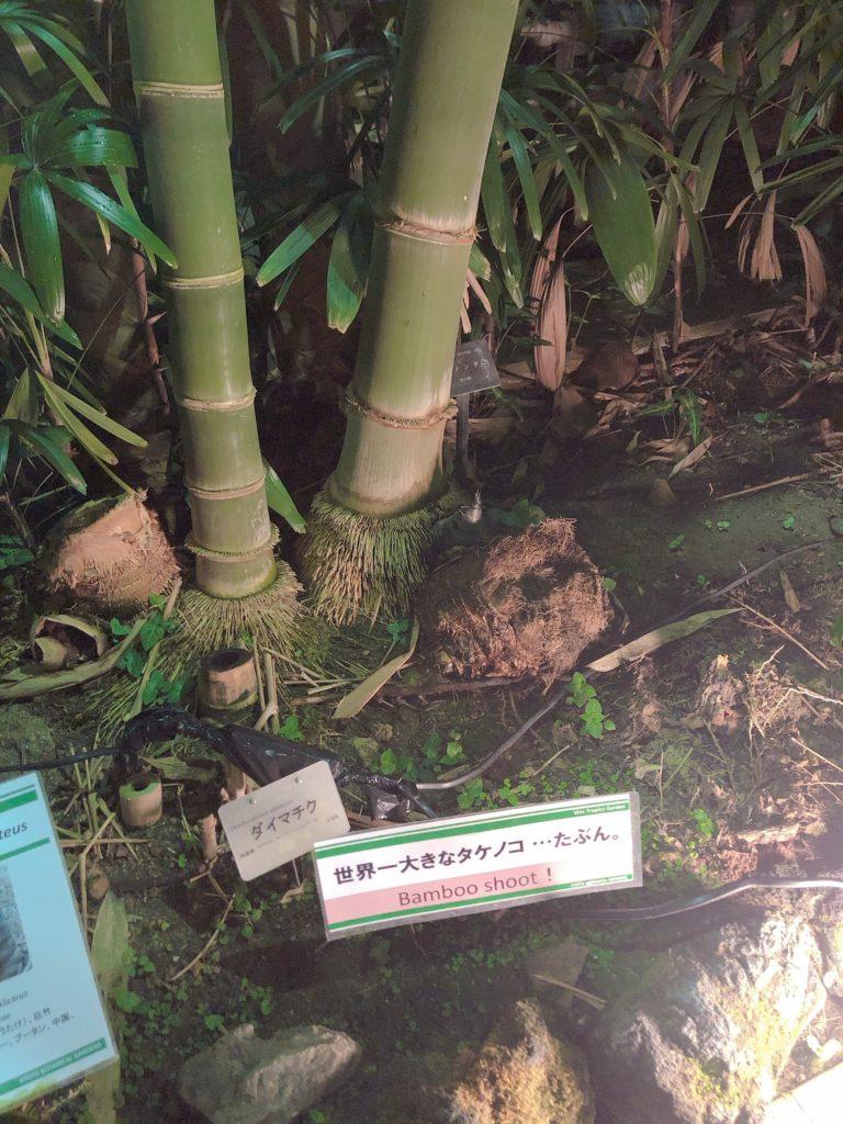京都府立植物園デート