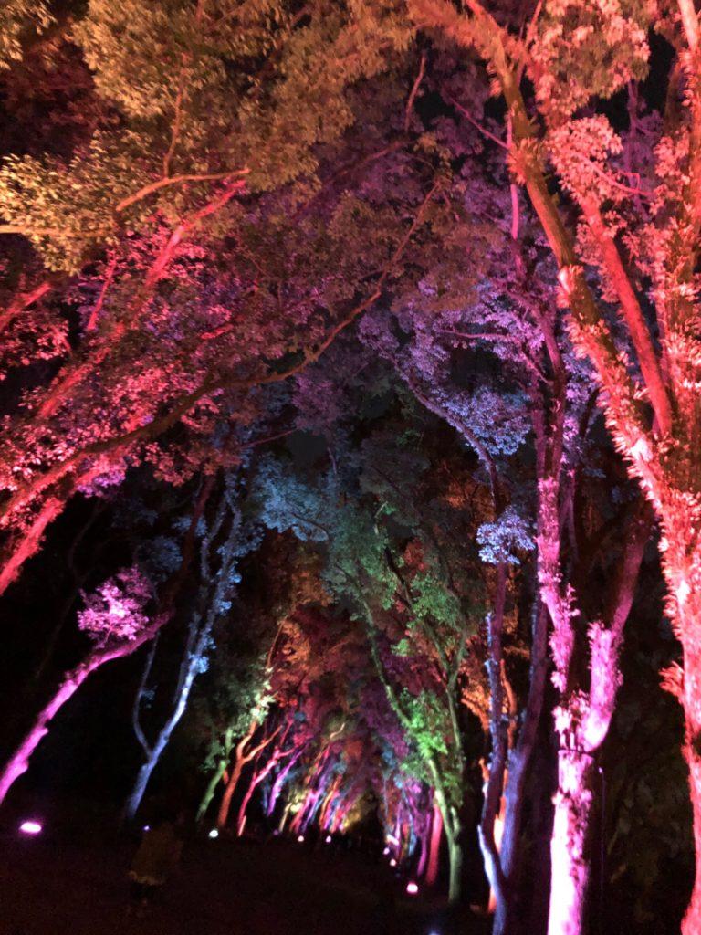 京都府立植物園クリスマスライトアップ