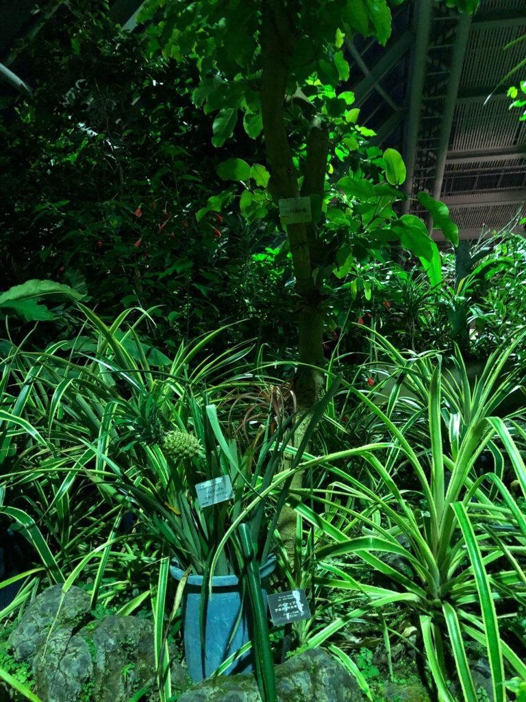京都府立植物園「温室」7