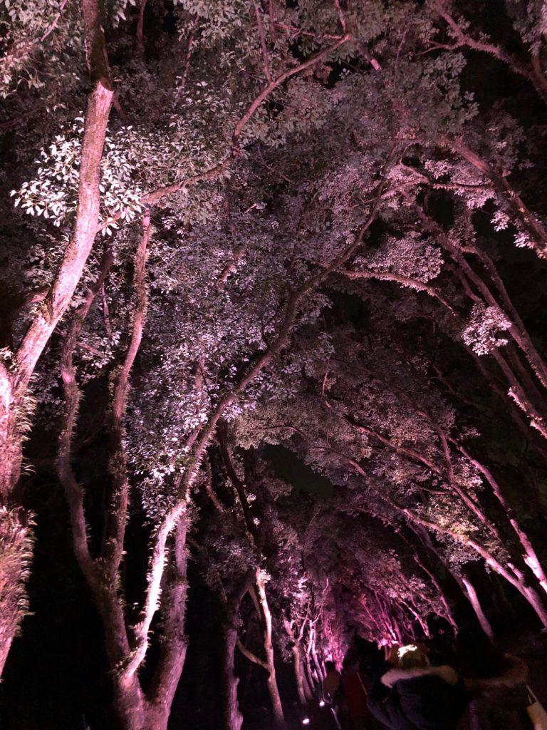 京都府立植物園ライトアップ3