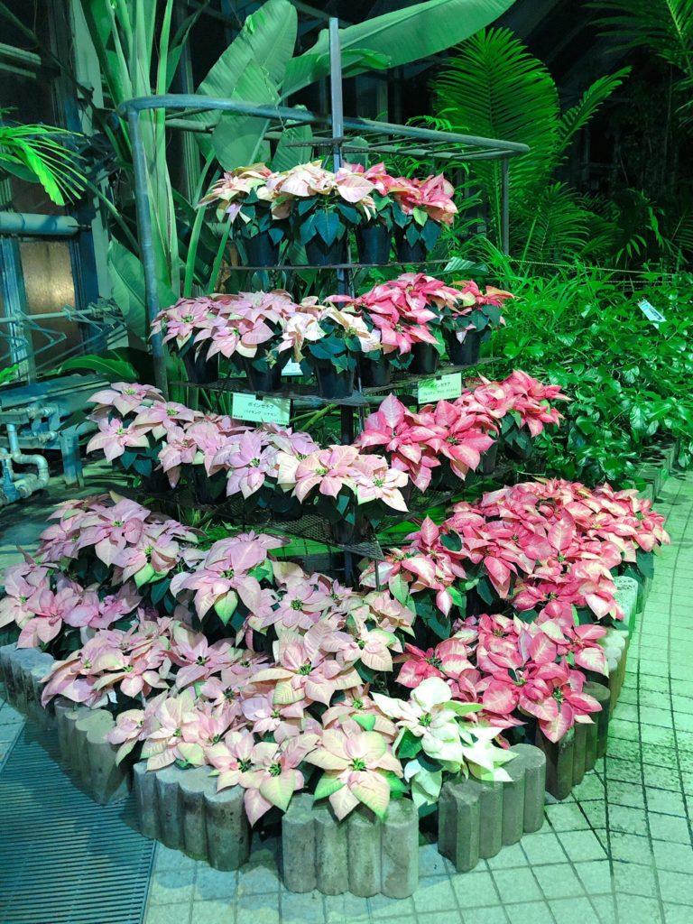京都府立植物園「温室」2