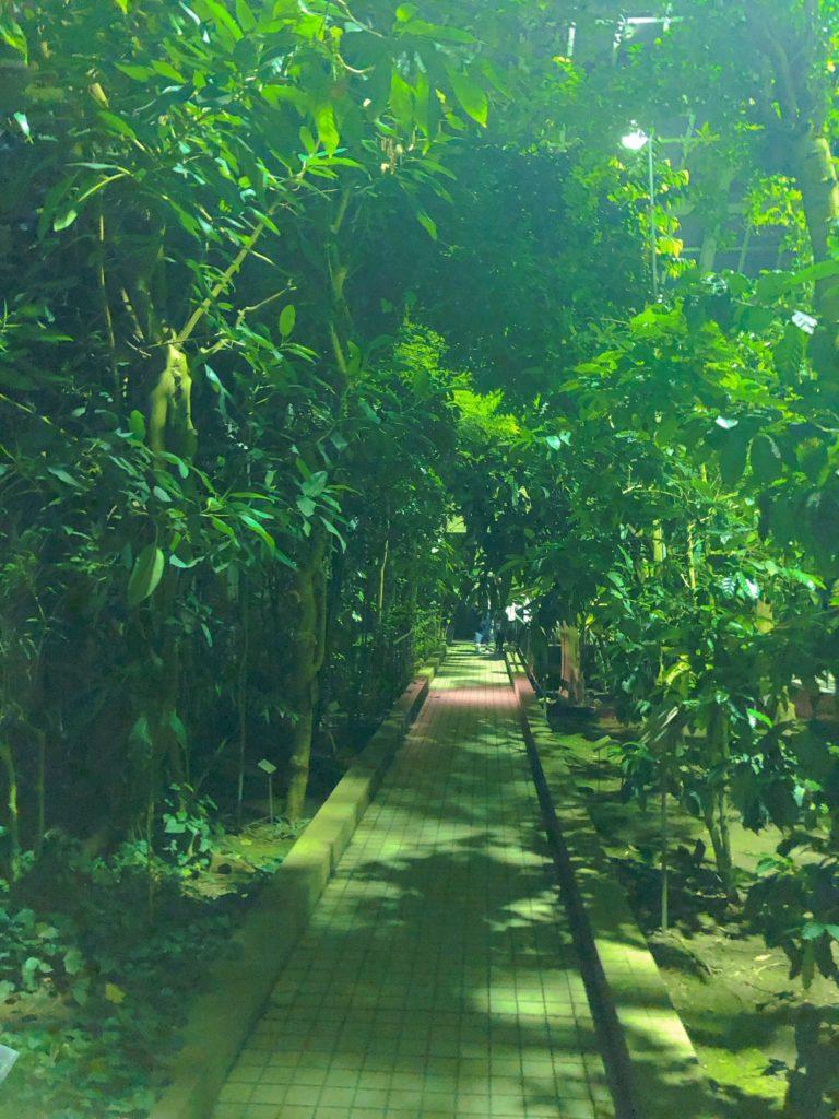 京都府立植物園「温室」デート