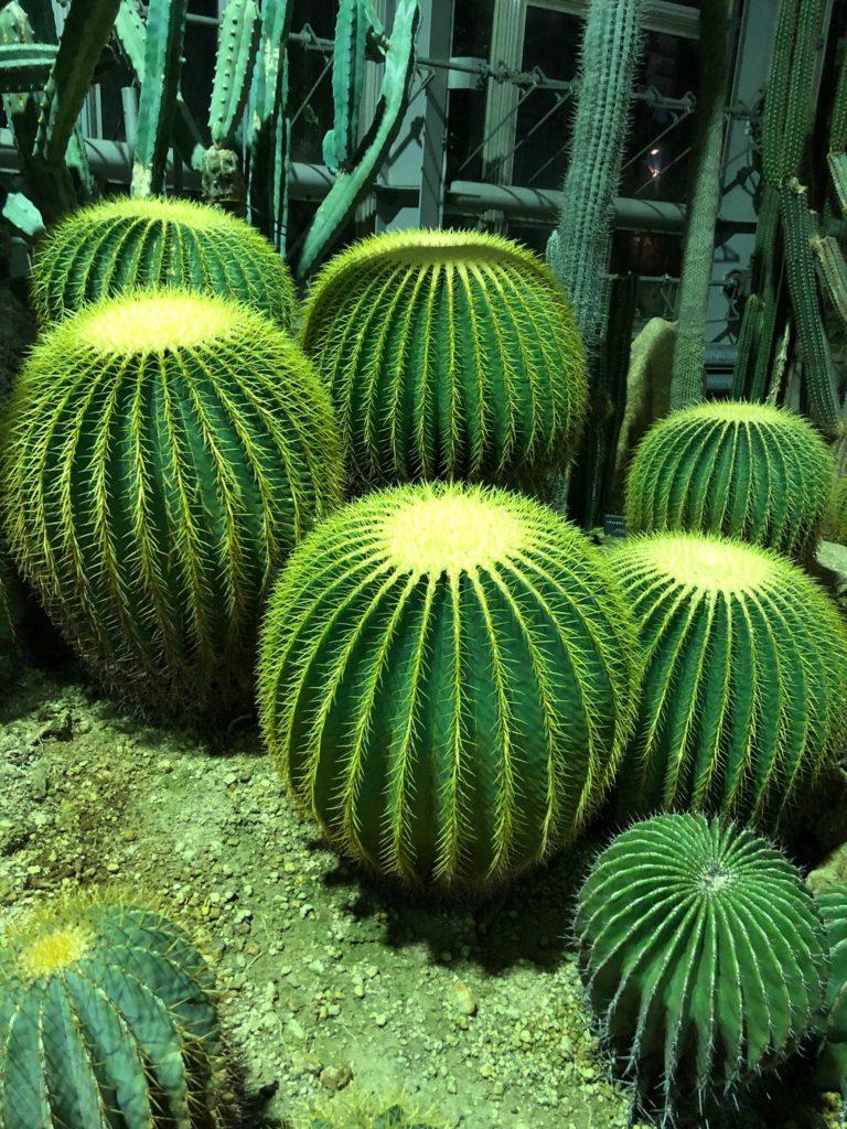 京都府立植物園温室デート