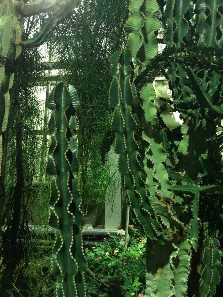 京都府立植物園「温室」1