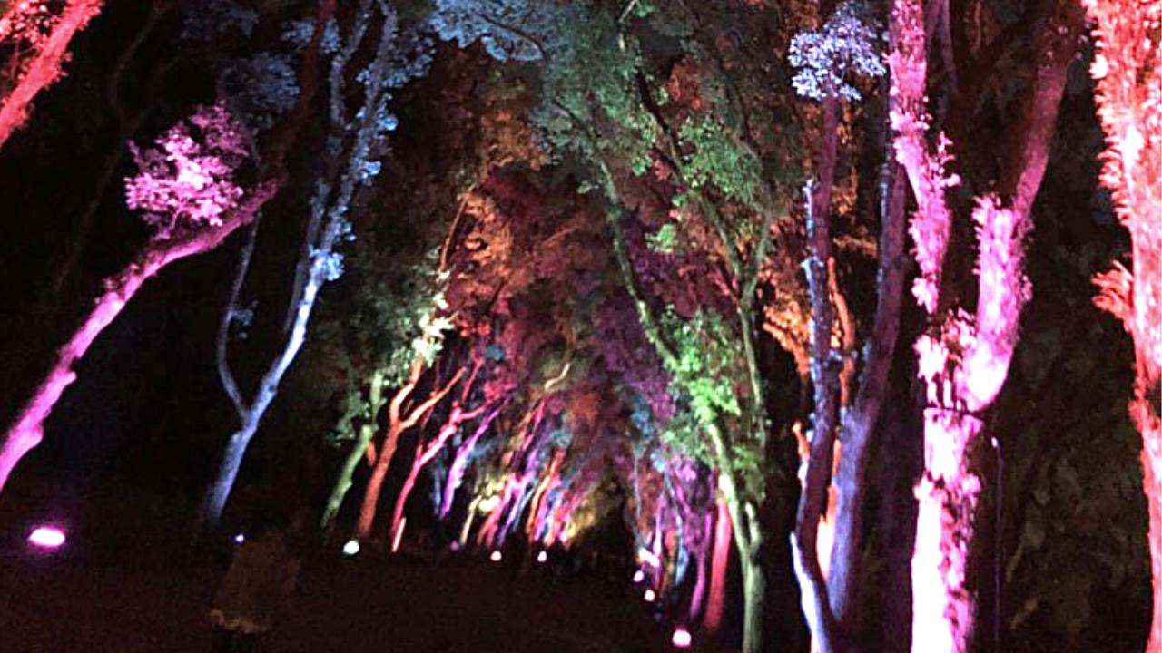 京都府立植物園で大人デート「温室に感動」