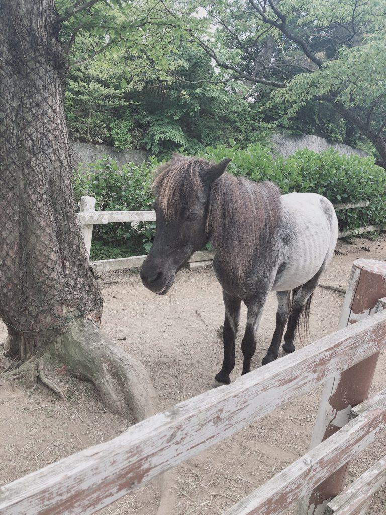 六甲山牧場に行った感想2