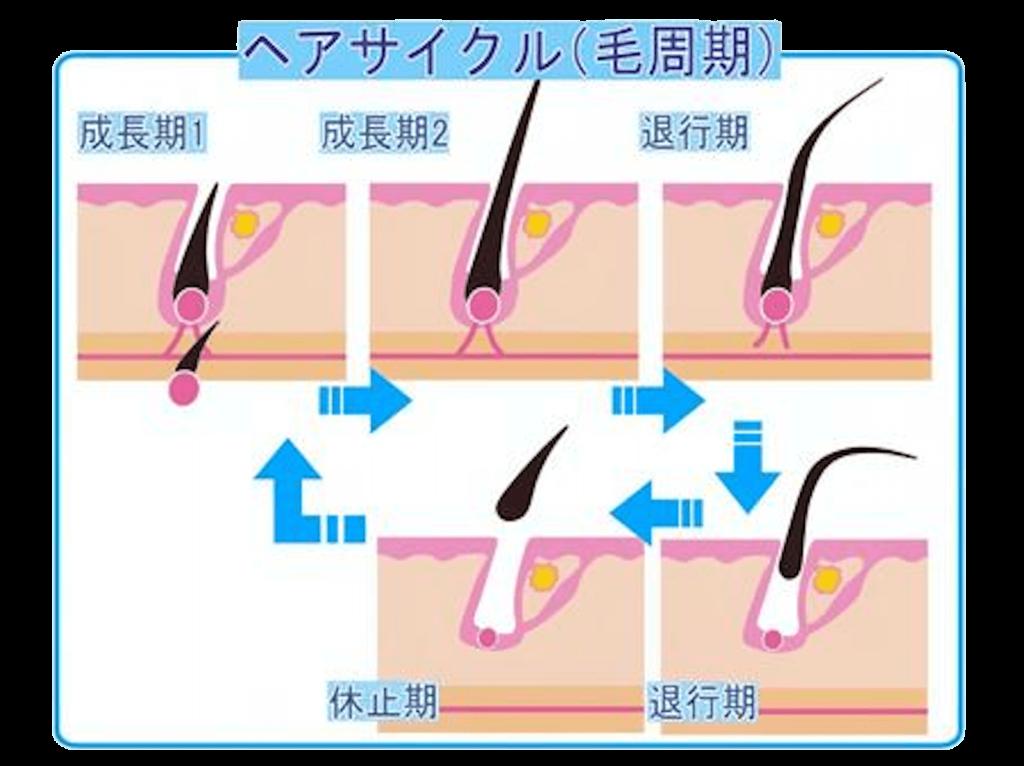 毛周期のイメージ2